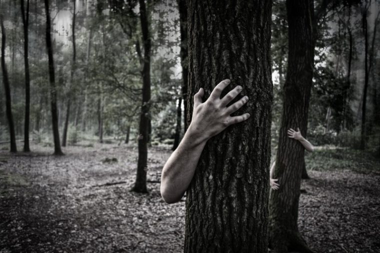 hands-trunk-creepy-zombies-forest-horror-scary