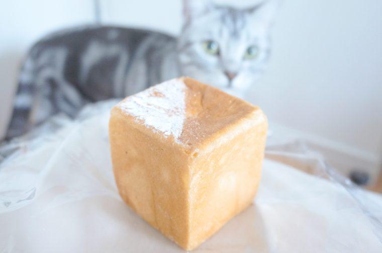 猫2016091601