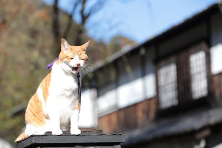 猫忍 特別映像2